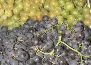 grozdje2 (Medium)